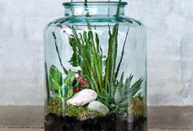 Terrarium Love / These mini microclimates in a beautiful glass jar are easy to maintain and make a fabulous alternative to flowers. As seen in all the latest style magazines, they're bang on trend.