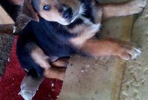 My puppy Hachiko