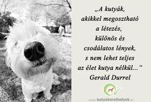 Kutyás idézetek / Idézetek a kutya-szeretetről!