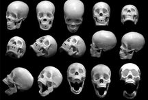anatomy / anatomy and bones