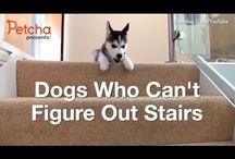 Sjove videoer / Hunde på trapper
