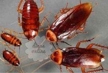 Eliminar insetos