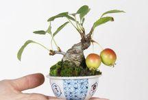bonsai :) i love it!