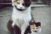 ...love... / Animals, qoutes, pictures et al. that I love.