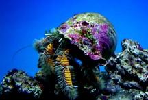 Waikiki Aquarium and Sea Creatures