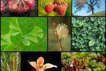Blog despre Flori