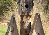 bird houses/feeders