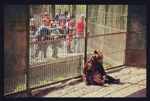 Állatok a szórakoztatóiparban / Számos módon használunk állatokat szórakozáshoz. De vajon etikus-e valakit megfosztani szabadságától, csak hogy mi gyönyörködhessünk bennük?   Állatkertek Tengeri állatparkok Cirkusz Lóverseny Lovaskocsik Bikaviadalok Agárverseny Medvetáncoltatás Díjugatás lovakkal Oroszlán- és tigriskölyök-simogatás Filmipar