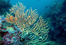 Mazara del Vallo sott'acqua undersea scuba dive / Foto subacquee dei fondali di Mazara del Vallo,