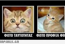 γάτα κια