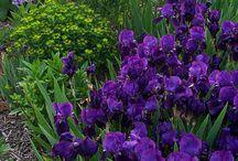 flower colour inspiration