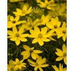 fiori gialli--arancio