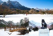 อุทยานแห่งชาติซอรัคซาน Seoraksan (설악산국립공원)