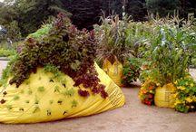 #Trend: Guerilla gardening