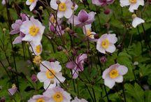 INSPIRATIE: BLOEMEN, PLANTEN en BLOEMBAKKEN / tuinplanten, heesters, bomen, bloembakken