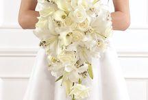 Ivory/White Weddings