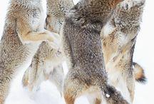 Animal Illustrations / by Barbara Lewis