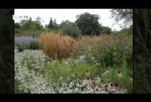 Garden Videos / by George Harrington
