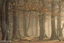 Forest / When the oak is felled the whole forest echoes with it fall, but a hundred acorns are sown in silence by an unnoticed breeze.  Thomas Carlyle