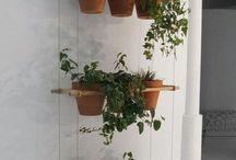plantss