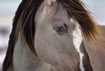 Hevosten mallikuvia