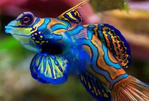 Étrange poisson