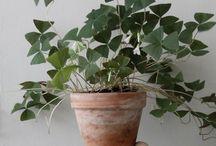 piante d' aplartamento