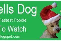 Doggie tips