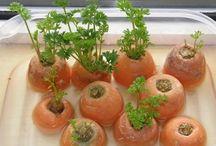 Gemüse selbst ziehen