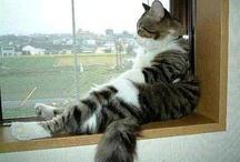 Cat's & Kittens