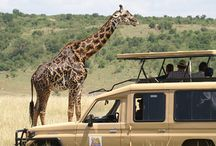 Safari Tours / Get unforgettably exciting safari experience with SAFARI EMBASSY! Renowned safari travel experts in Botswana!