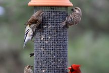 Bird feeders/houses
