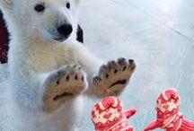 Isbjørner og bjørner