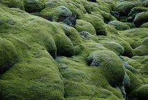 MOSS and other natur product by Natures Design / Moss and other natur product  in the world  www.natureanddesign.pl   www.naturesdesign.pl