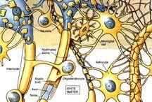 kognitive system structure