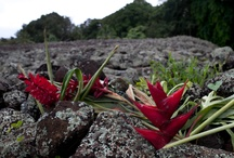Hawexican Roots / by Leachy Leacha