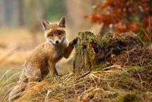 Foxxing