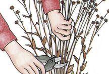 Gardening 🌸🌻🌼🌺 / by Ness Perez