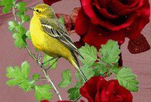 gif bloem en vogel