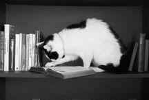 Gatti - Cats
