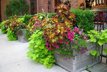 Flower Containers | Gardening / Nothing adds color and livens the spirit like decorative flower pots!