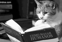 Gatos / Michis!