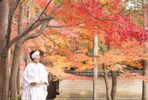 京都の紅葉 / 京都の紅葉