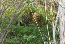 Orava - zabudnutá uhoľná veľmoc / Málokto vie, že Liesek na Orave mohol byť v minulosti výraznou konkurenciou ostravskému regiónu v ťažbe hnedého uhlia. Éra ťažby uhlia bola v regióne poznačená krachom a odvtedy mnoho zvyškov banskej činnosti chátra a upadá do zabudnutia. Miestni však vedia, kde ešte nájsť posledné zvyšky banských stavieb.