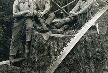 Vintage Logging