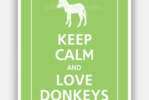 Donkeys / We LOVE donkeys!  Our grounds house many of these majestic beasts.