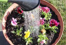 Gardening / Planting flowers / by Nicole Harrison