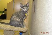 adoptable kitties / by Rose Carroll