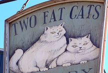 Cats on Signs