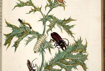 Insectos y otros